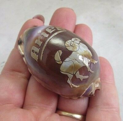 Carved cowrie sea shell with Aries Zodiac Ram