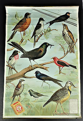 1917 Arm and Hammer Baking Soda Useful Birds of America Paper Poster