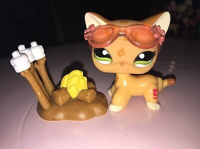 Littlest Petshop Lps Pet Shop Chat Europeen Shorthair Cat # 1120 Acces  Origine