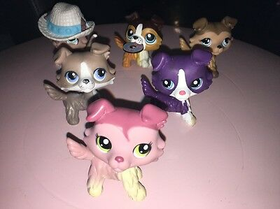 Lot 6 Authentic Littlest Petshop Collie Dog Colley LPS Chiens