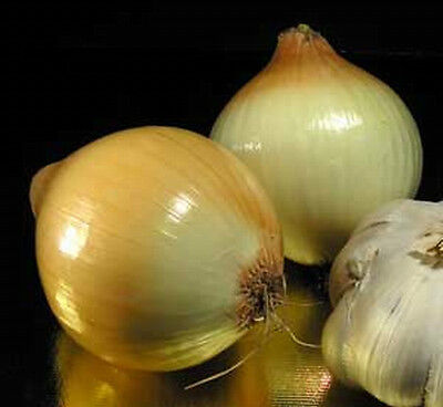 Onion SWEET WALLA WALLA 50 Seeds (HEIRLOOM / ORGANIC)