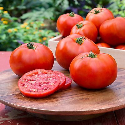 """Tomato """"New Girl"""" GENUINE F1 HYBRID CERTIFIED ORGANIC SEEDS COMBINED SHIPPING"""