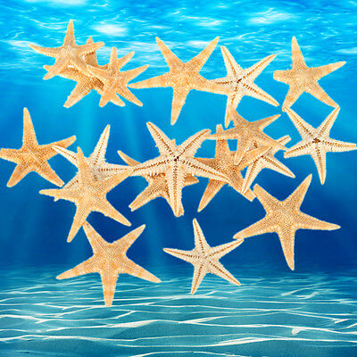 20-100pcs Mini Starfish 1.5-3CM Embellishments Shells Crafts Beach Sea Star DIY
