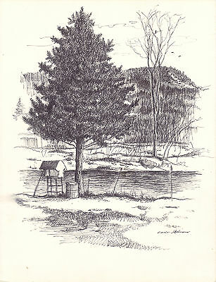 Spuce tree, ink drawing by Carlo Italiano