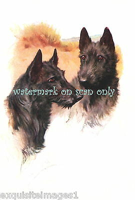 Vintage Art~Wardle~Scottish Terrier Dogs~Profiles~ NEW Large Note Cards