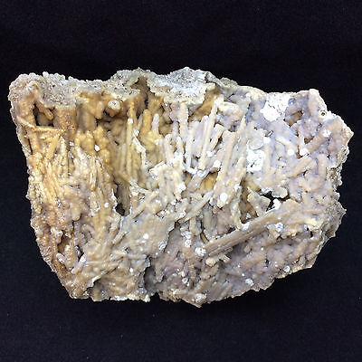 Agatized Fossil Coral 170772 113g Metaphysical Emotional Balance Healing