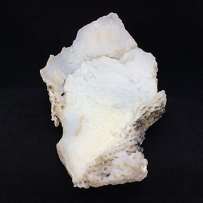 Agatized Fossil Coral 170778 2lbs 15.6oz Metaphysical Emotional Balance Healing