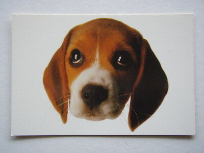 Choose Cruelty Free He's Going To Laboratory Avant Card #1486 Postcard