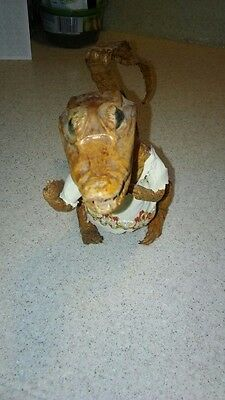 Vintage Taxidermy Real Baby Alligator  Stuffed Made in Columbia