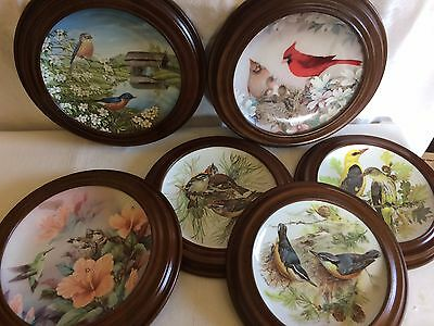 "Collectable  bird plates set of  6   8""  with frames wood"
