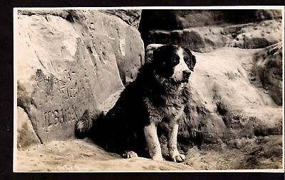 Postcard ~ NEWFOUNDLAND DOG Real Photographic ~ Middle 1900s