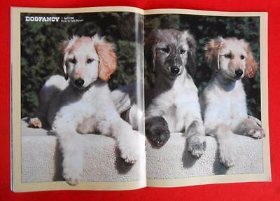 RARE  ~ AFGHAN HOUND Puppies Centerfold ~ DOG FANCY Magazine ~ April 1988