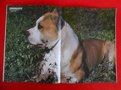 RARE ~ STAFFORDSHIRE PIT BULL TERRIER Issue ~ DOG FANCY Magazine ~ October 1983