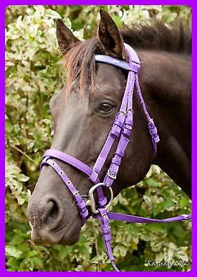 PURPLE NYLON WEB HORSE BRIDLE & REINS *Mini *Shetland *Pony *Cob *Full
