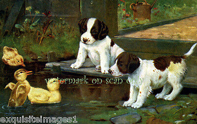 Cobbs~Springer Spaniel Pups w Chicks~NEW Note Cards