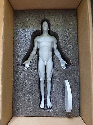 3D total Planar Male Anatomy Figure: 11-inch Anatomical Reference