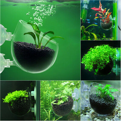 Aquatic Plant Crystal Clear Glass Cup Pot Aquarium Aquascaping Fish Tank Holder
