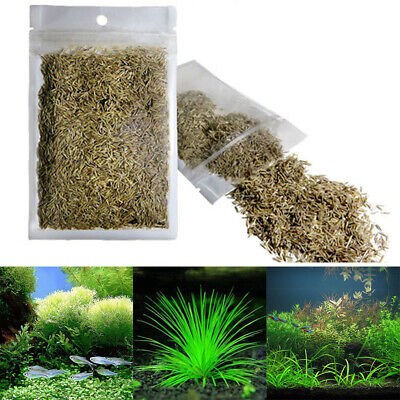 Graine d'aquarium Graines de plantes Water vert herbe Aquarium Decor 1000pcs
