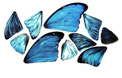 10 Pieces Assorted Blue Morpho Butterfly Wings Wholesale Lot Mix