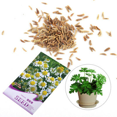 100x Mosquito Repelling Plant Mozzie Buster Grass Seeds Garden Bonsai Decoration