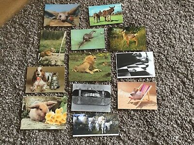 12 Animal Postcards