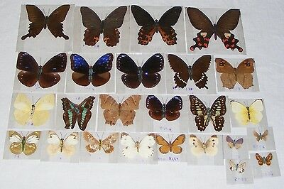 Lot of 25 different real dried pressed butterflies, flat, with paper bodies