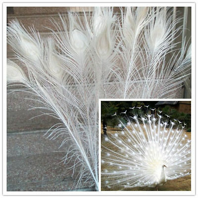 Beautiful white natural peacock feathers 70-80 cm 28-32 inches Free shipping DIY