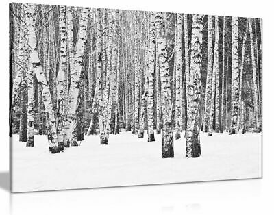 Rustic Art Tree Forest In Winter In Black & White Canvas Wall Art Picture Print