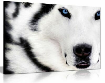 White Wolf Animal Artwork Canvas Wall Art Picture Print