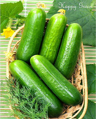 VEGETABLE - CUCUMBER GREENHOUSE - 25 SEEDS - Only 35 days to first harvest