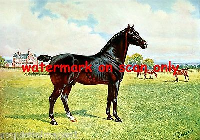 1911~Dual Champion Pony Stallion~NEW Large Note Cards