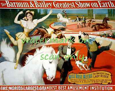 1898 Barnum & Bailey Circus Poster~ Horses~Pit Bull Terrier Dog~NEW Note Cards