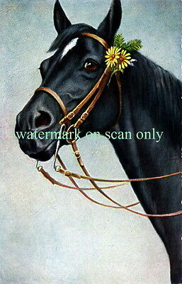 Vintage Art~Black Horse with Yellow Daisy Flowers in Bridle~NEW Large Note Cards