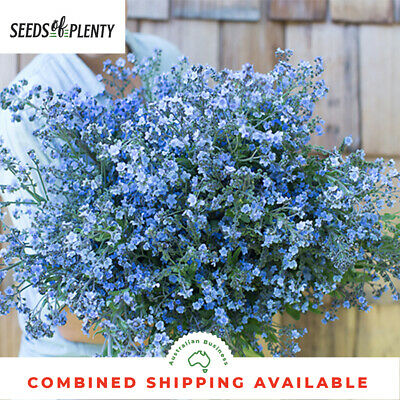 FORGET ME NOT - Chinese (300 Seeds) Masses of bright flowers