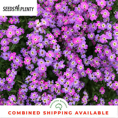VIRGINIA STOCK -  (2500 Seeds) PROLIFIC BLOOMER Easy to Grow