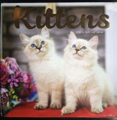 New 2018 16-Month Wall Calendar Appointment Planner Kittens / Cats