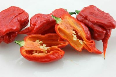 25+ Choice World's Hottest HP22B Carolina Reaper Hot Pepper Seeds-E 080