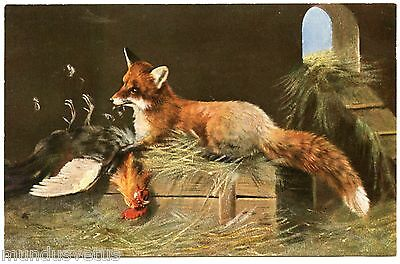 Magnifique Renard .  Fox. Chasse. Hunting. Poulailler. Hen House. Coq. Rooster