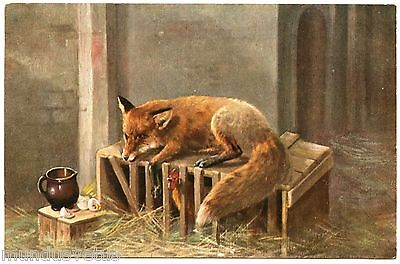 Magnifique Renard .  Fox. Chasse. Hunting. Poulailler. Hen House