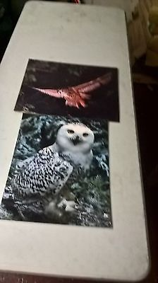 """bankrupt stock job lot of laminated posters owls [60] size 20""""x 16"""""""