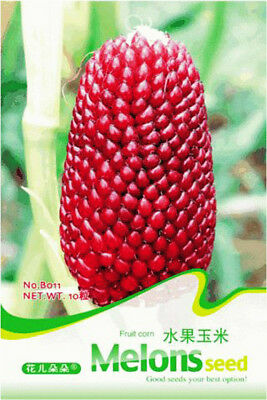Original Package 15 Corn Seeds Zea Mays Red Fruit Strawberry Corn B011