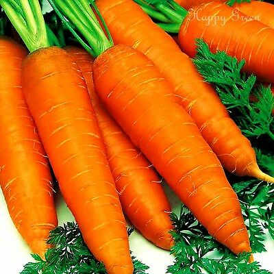 Vegetable - Carrot - Early Nantes 2 -  12 000 Seeds