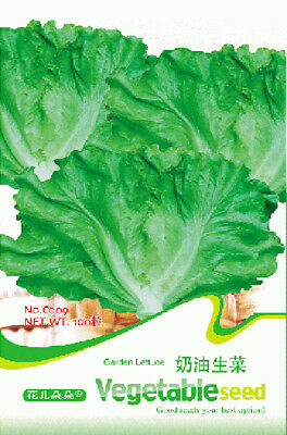Original Package 100 Lettuce Seeds Lactuca Sativa Lettuce Vegetable Seed C009