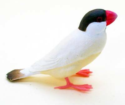 Shine-G Java rice sparrow finch Cinnamon color figure US seller New