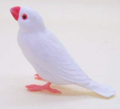 Shine-G Java rice sparrow finch White color figure pet US seller New