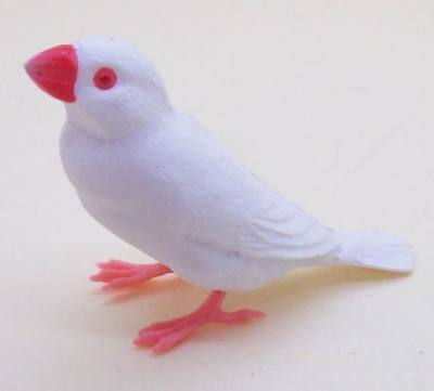 Shine-G Java rice sparrow finch White Albino figure pet US seller New