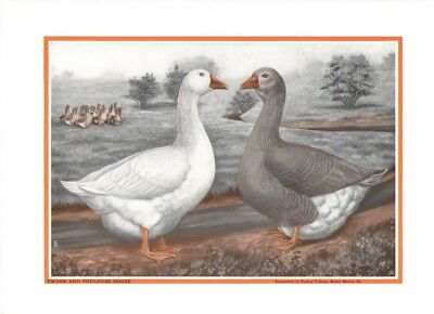 1926-52 Emden and Toulouse Goose by LA Stahmer--Poultry Tribune Supplement