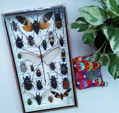 Real Rare Mix Beetles Stick Insects Bug Bugs Taxidermy Display Gift Box Cicada