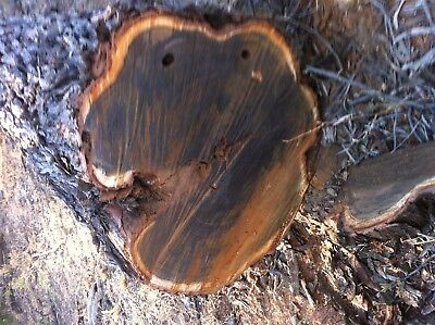Gidgee wood ...Gidgee root