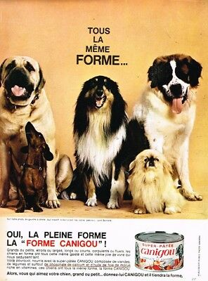 Breweriana, Beer Publicite Advertising 114 1982 Canigou Aliment Pour Chien
